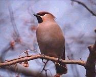 Если Вы по-настоящему любите диких птиц, пожалуйста, не покупайте их на...
